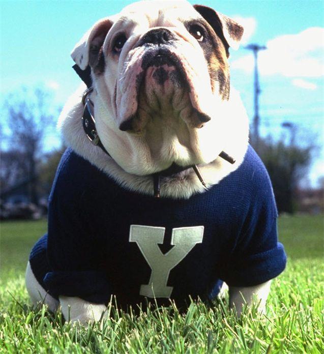 Живые талисманы в студенческом спорте / NCAA Top Real Animal Mascots - Handsome Dan / Yale
