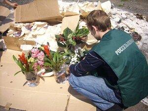 В Приморье предотвращена поставка партии заражённых цветов
