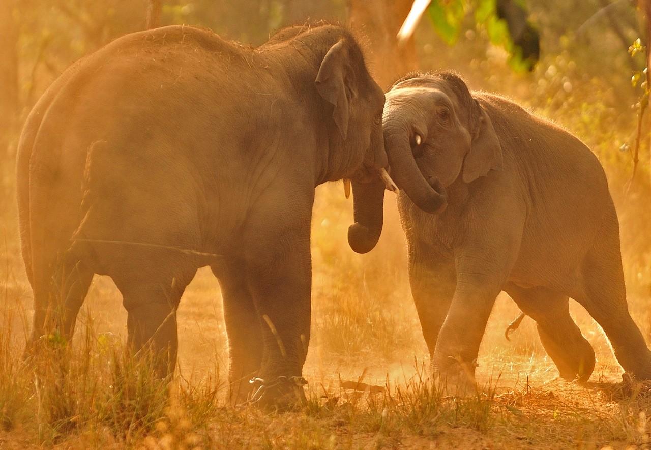 Игры слонов