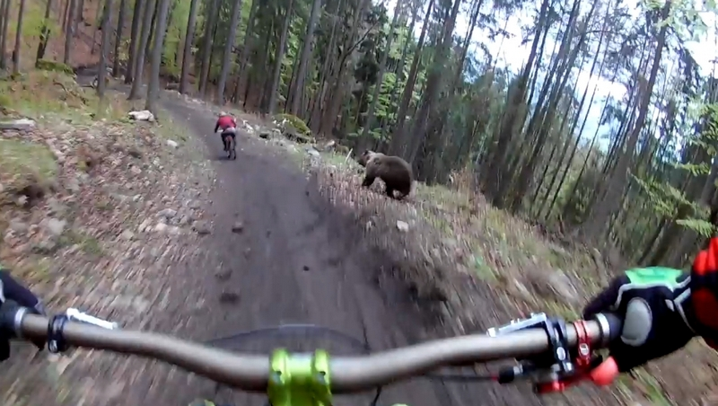 Маунтинбайкер чудом избежал нападения медведя