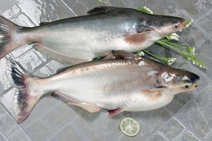 США разрешили еще 12 вьетнамским экспортерам поставлять пангасиуса на американский рынок