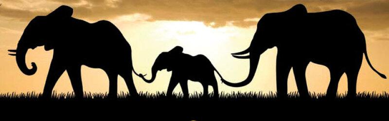 Идея спасения слонов объединило Африку