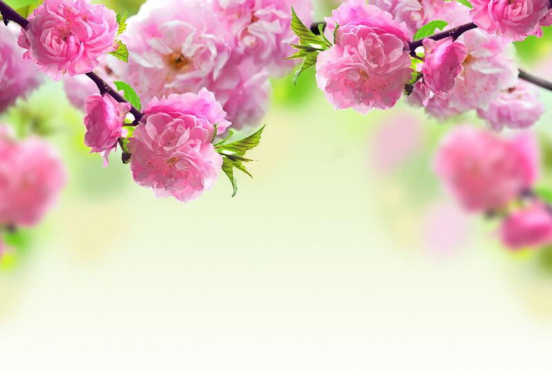 Фотообои цветы фото высокого разрешения