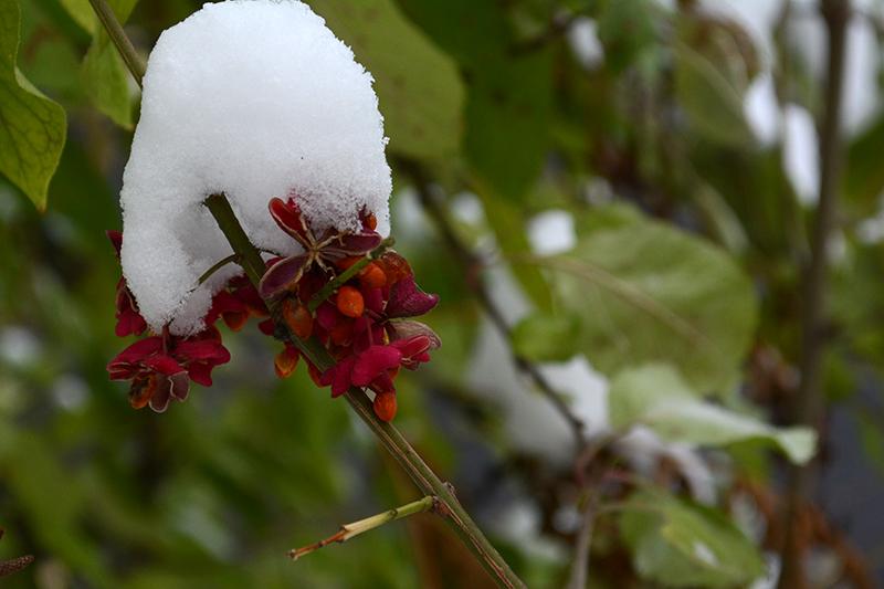 осень под снегом 11
