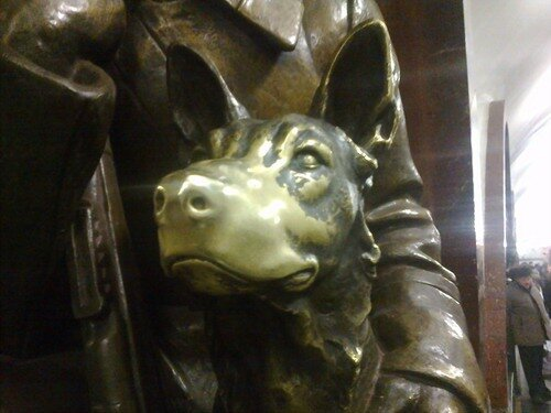 Нос собаки пограничника