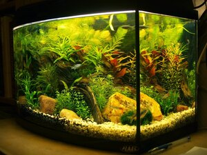 аквариум 22 12 10
