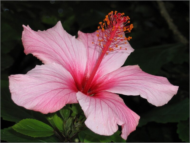 Цветок крючком с бисером мастер класс фото себя