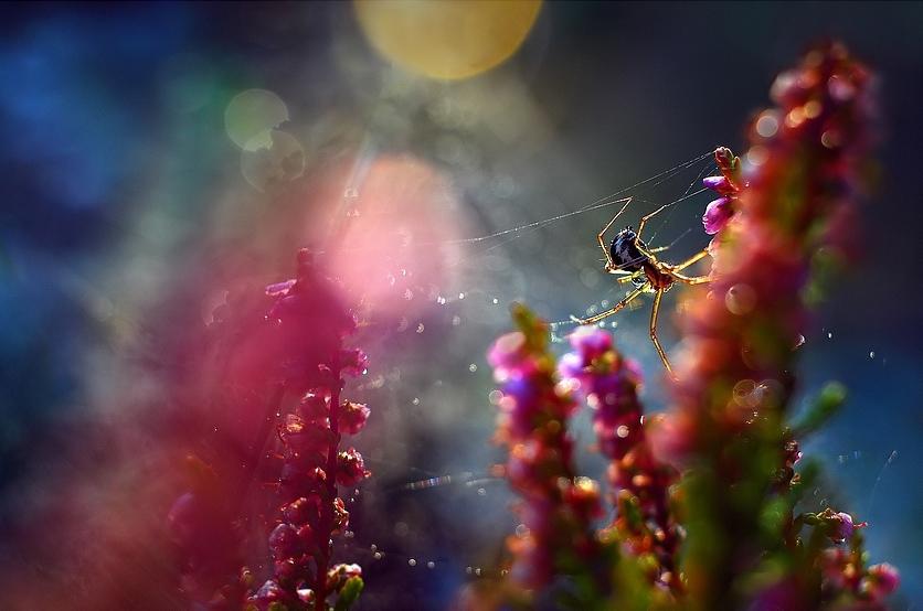 Макрофото от Magdalena Wasiczek