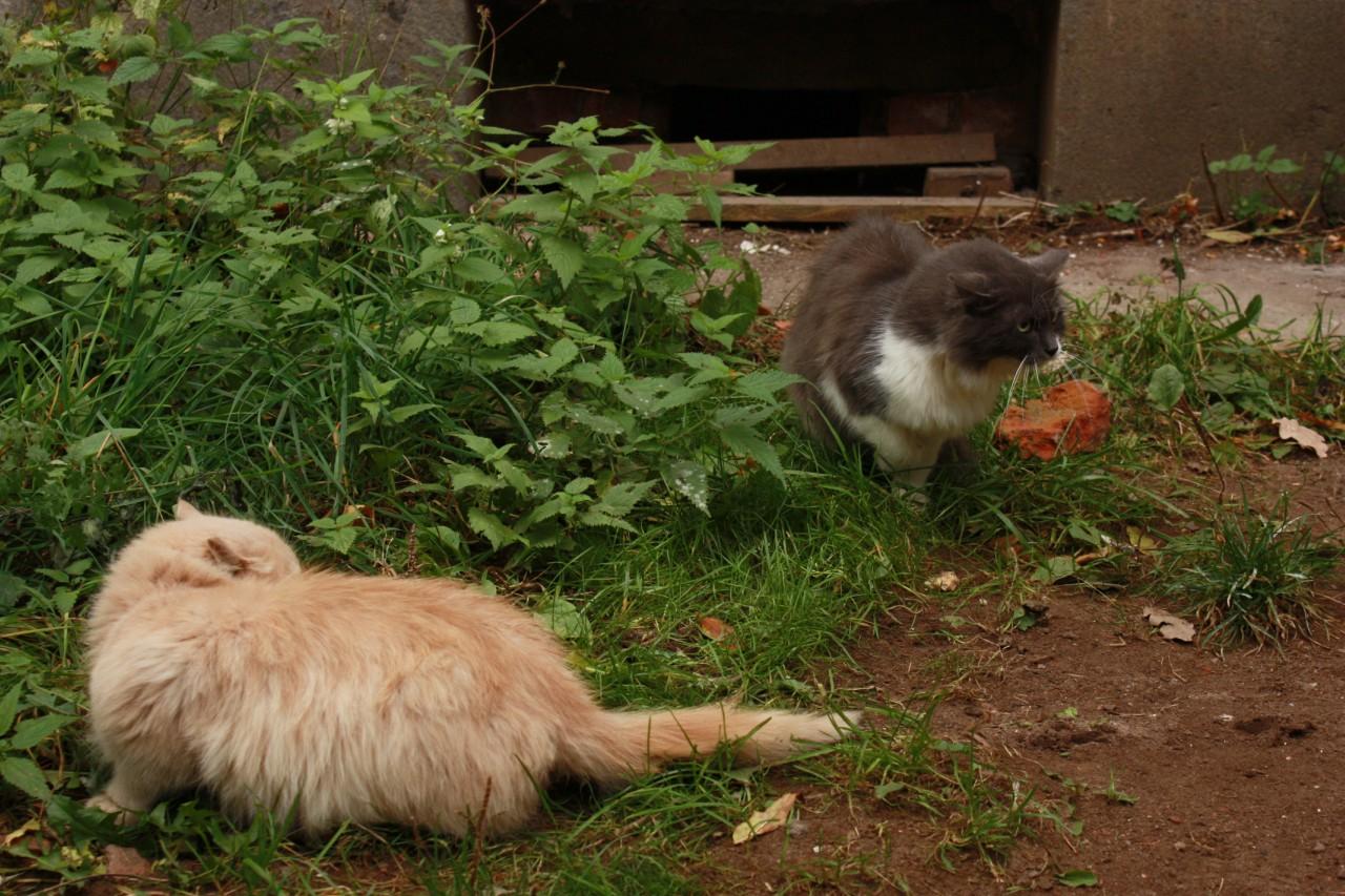 Коты шипят на пса.