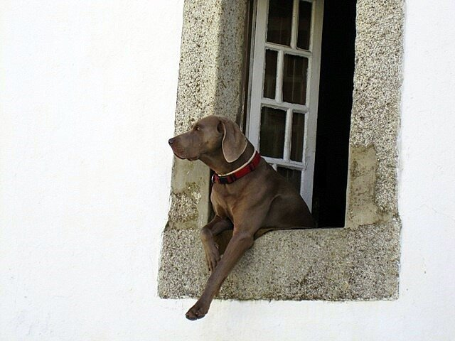 Dog window beautiful Evora Portugal