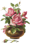 Rose Victorienne(элементы)  26