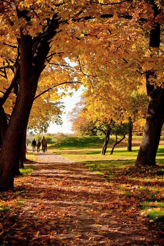 Всё-таки осень — очень красивое время :)