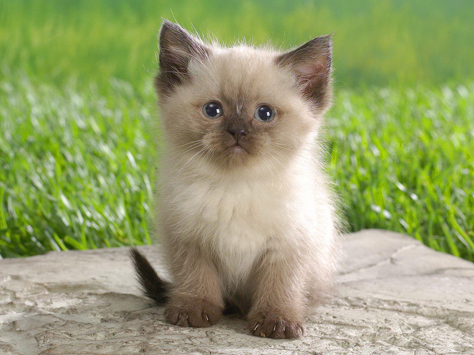 Милий кошеня