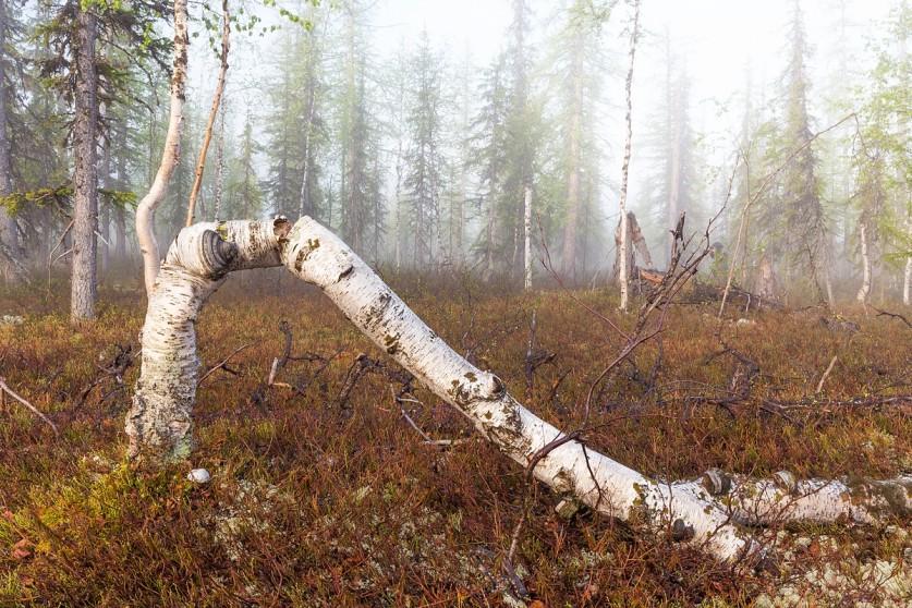 Фото: Кирилл Уютнов