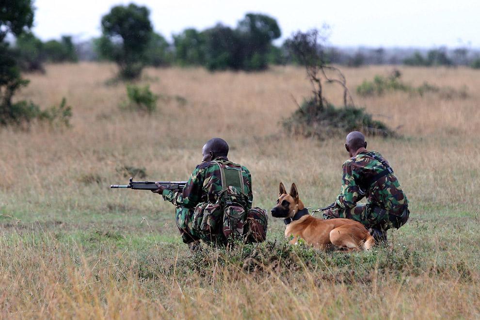 Кенийские рейнджеры на учениях.