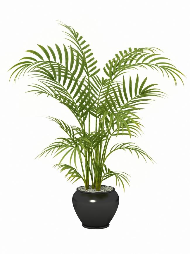 Это растение лучше всего подходит для фильтрации бензола, трихлорэтилена иформальдегида . Его лучше