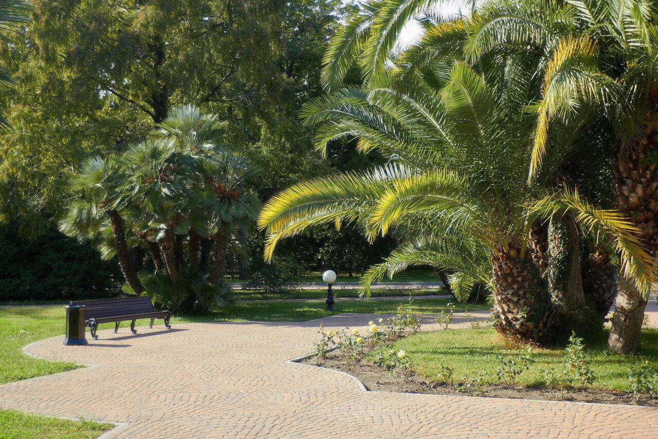 Цветок пальма индира ганди фото
