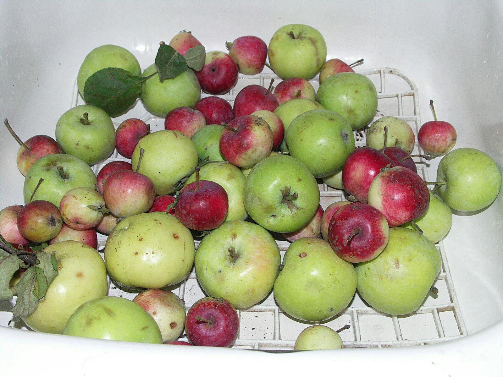 яблоки в раковине