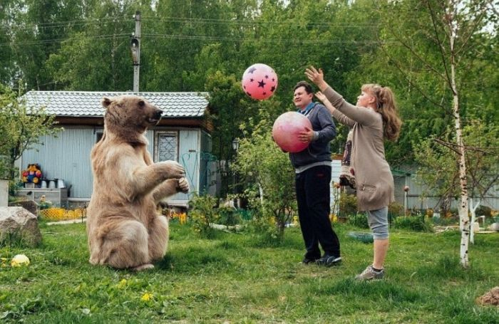 Обычная русская семья с медведем