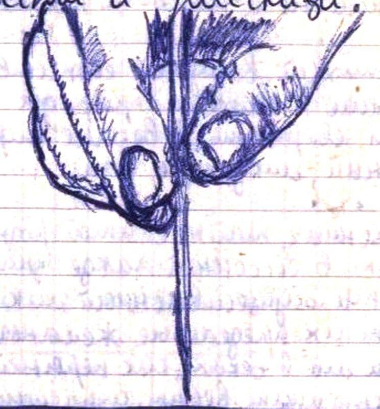 Рисунок. Книги №1 007 - 01.jpg