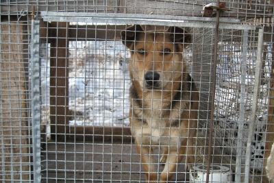 В Гатчине отловят 500 безнадзорных собак