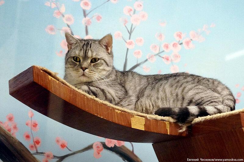 Осень. Театр кошек. Кошки. 15.10.15.09..jpg