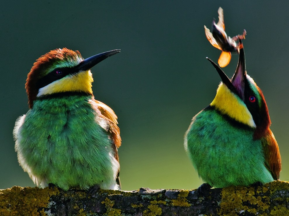 ������ ���������� National Geographic � �����