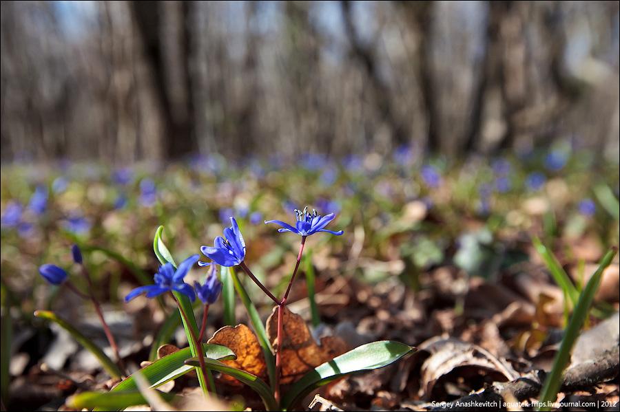 Весная в горах