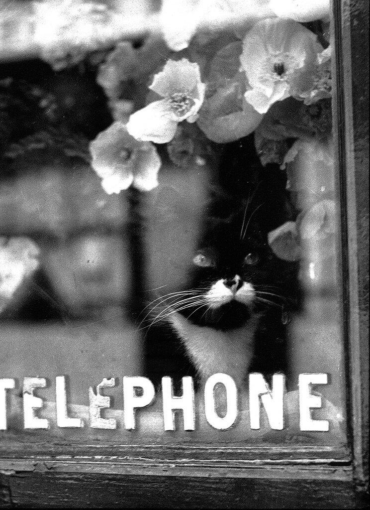 1938. Кошка Колетт