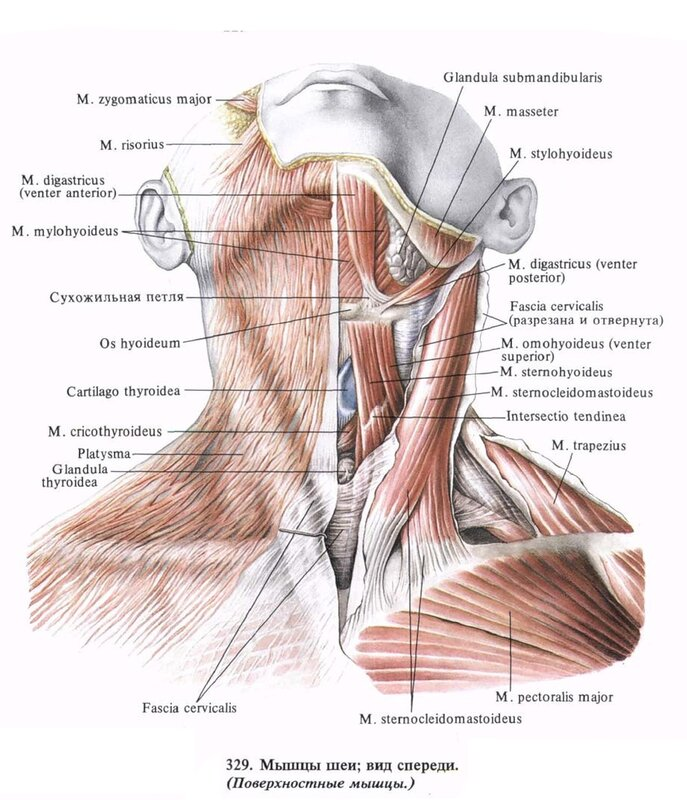 Остеохондроз шейного отдела: симптомы и лечение в домашних