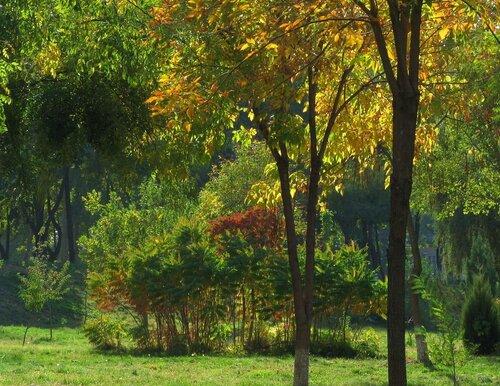 Ташкентская осень