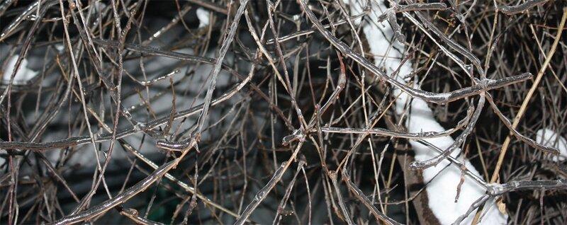Ветви в ледяном