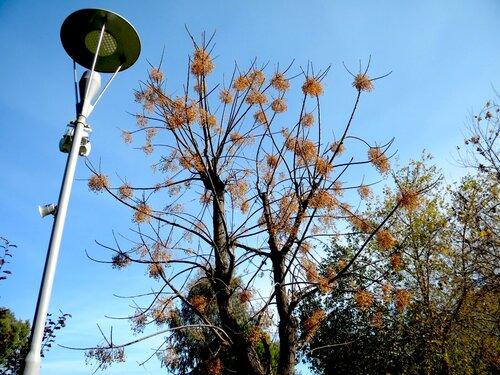 растение*