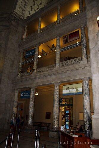 коллонны музея естественной истории, Вашингтон, сша