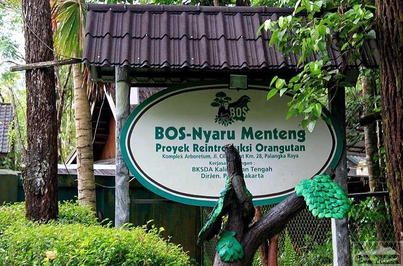 Центр реабилитации орангутанов