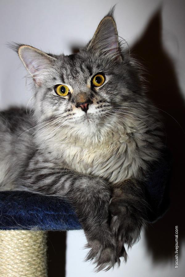 Кошка Флора