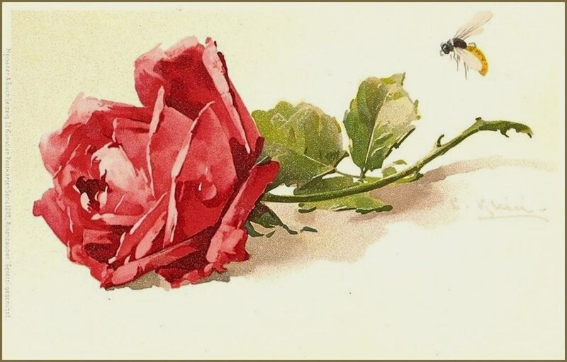 К. Кляйн.   Роза и пчела.