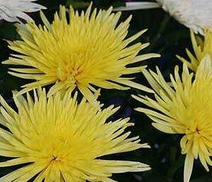 В Приморье уничтожили зараженные цветы