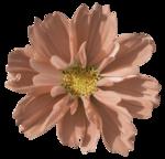 Sky_VG_Flower8.png