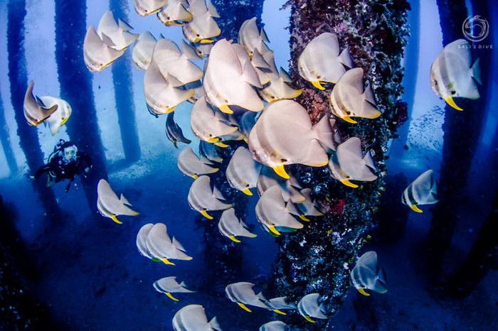Уникальный подводный лес на Бали от Лукаса Шольц-Нартовски (Lukas Szolc-Nartowski)