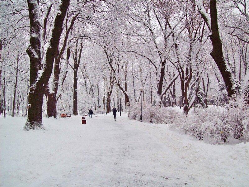 Главная аллея Мариинского парка зимой