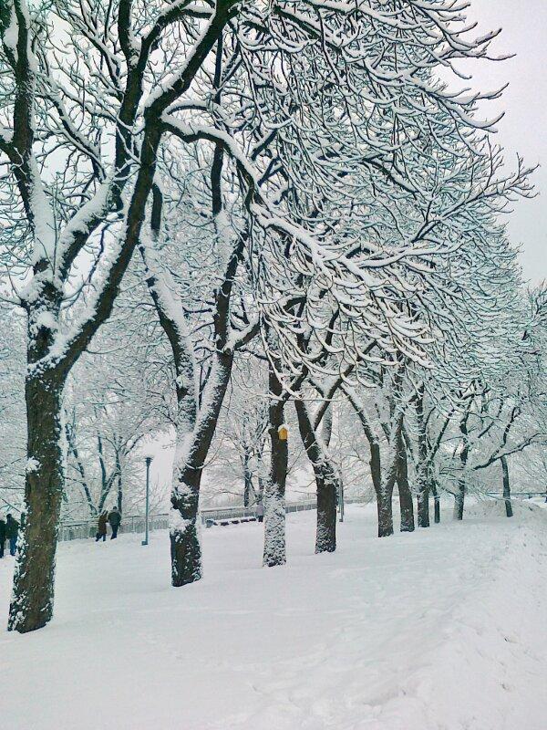 Аллея деревьев на Владимирской горке