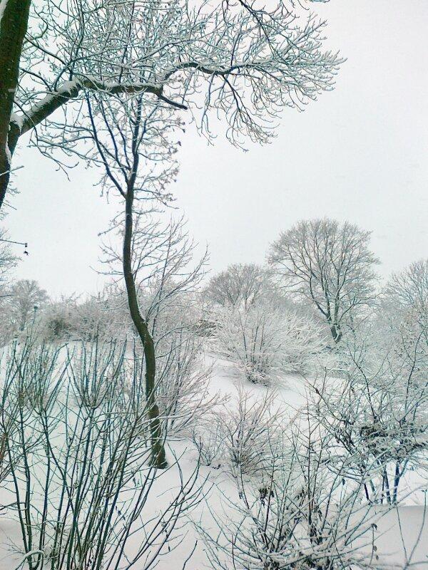 Зимняя природа Киева