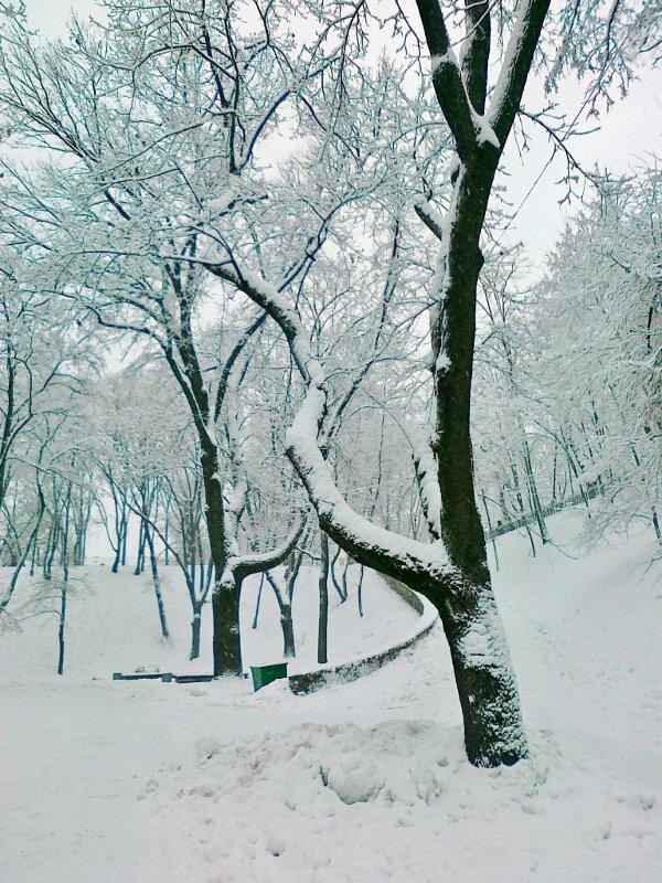 Снег на деревьях Владимирской горки