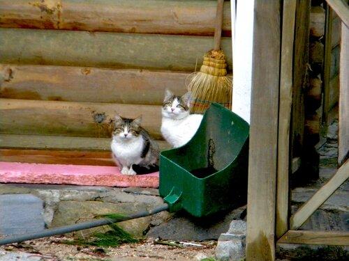 Это мИ - кошки...