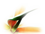 12206401778_fleurs_nikita.png