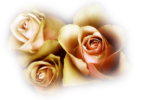 12206401779_fleurs_nikita.png