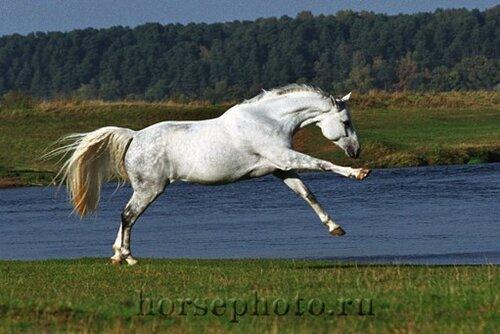 Скорость лошади составляет: - на шагу - 5 км в час - на рыси - 13 км в час - на галопе - 22 км в час (На скачках...