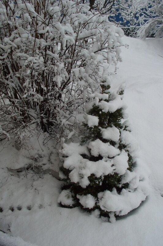 снег, снег в апреле