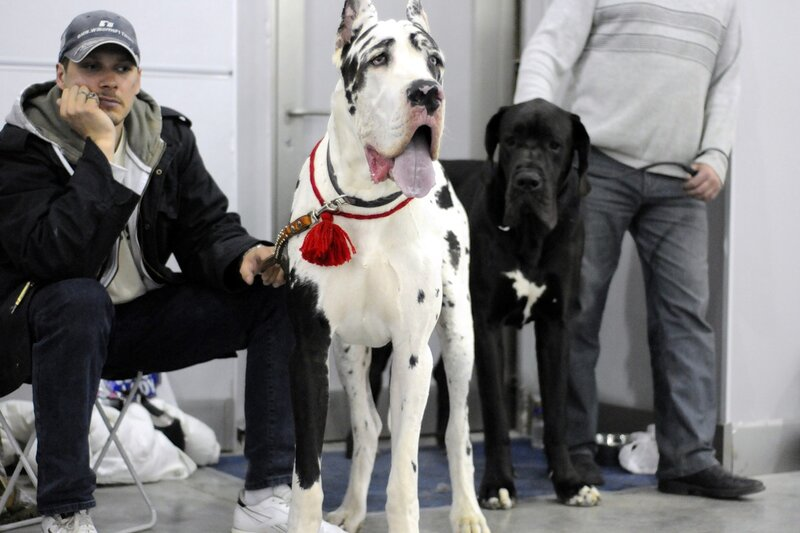 Международная выставка собак «Евразия-2011»